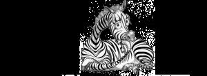zebra2013thinking